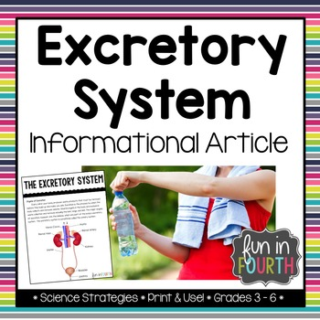 Excretory System Informational Article