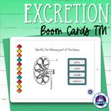 Excretory System Boom Cards