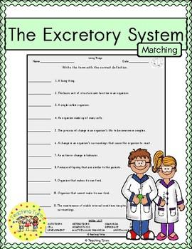 Excretory System Matching