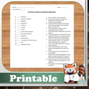 Excretory System Matching Sheet