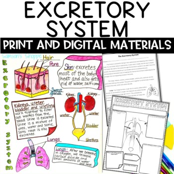 Excretory System Nonfiction Article and Doodle Sketch Note Activity