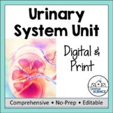 Urinary or Excretory System- PowerPoint, Illustrated Notes, Diagrams, & Quiz