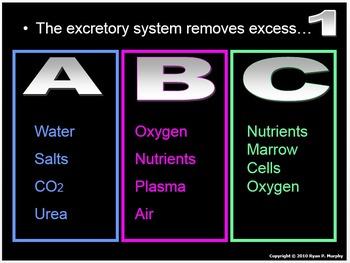 Excretory System PowerPoint Quiz, Integumentary System