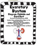 Excretory System Sort, Fold, Diagram and Clipart