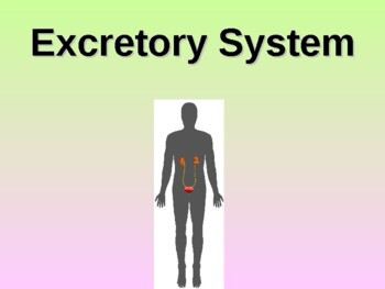 Excretory System Student Fill-in Notes