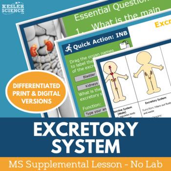 Excretory System - Supplemental Lesson - No Lab