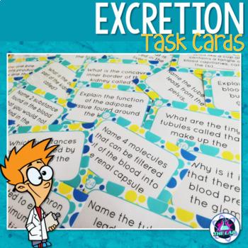Excretory System Task Cards