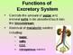 Excretory System Teacher Notes