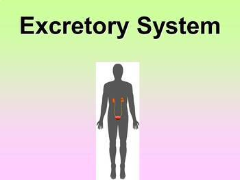 Excretory System Teacher and Student Fill-in Notes