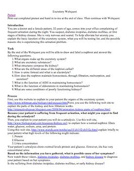 Excretory System WebQuest by NANCY PASSARELLI | Teachers ...