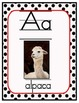 Exotic Animal Alphabet