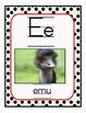 Exotic Animal Vowel Set