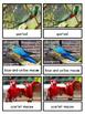 Exotic Birds Montessori 3-part cards