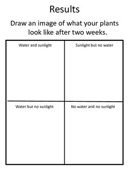 Experiment Notebook: Plants need sunlight and water!