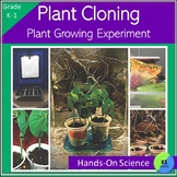 Experiment Plant Cloning with Kindergarten and First Grade