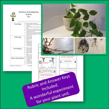Plant Growth: Cloning Plants With Kindergarten And First Grade
