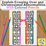 Explain Chromosomal Abnormalities and Crossing Over for Hi