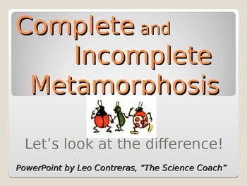 Explaining and Comparing Metamorphosis