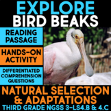 EXPLORE Bird Beak Adaptations - Natural Selection Science Station