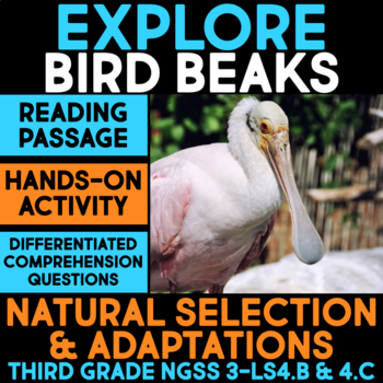 Explore Bird Beak Adaptations - Natural Selection Science Station