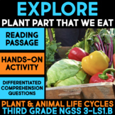 Explore Parts of Plants that We Eat - Science Station