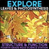 EXPLORE the Structure & Function of Leaves and Photosynthesis