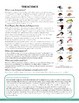 Exploring Bird Beak Adaptations - How are birds' beaks related to their diets?