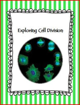 Exploring Cell Division