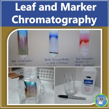 Leaf And Marker Chromatography Experiments:  Exploring Colors