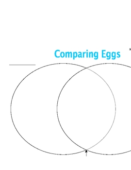 Exploring Eggs Lab