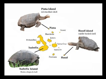 Exploring Evolution and Ecology in Darwin's Galapagos Islands - PowerPoint