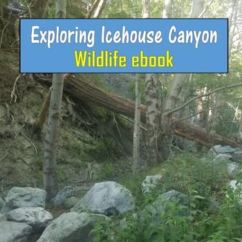 Exploring Icehouse Canyon (Wildlife ebook) - California
