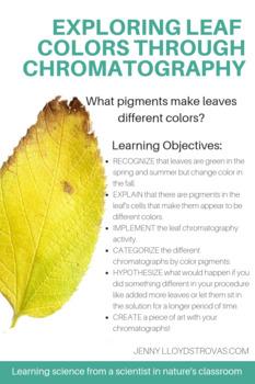 Exploring Leaf Color through Chromatography - What pigments make colors?