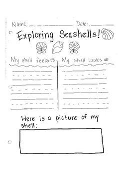 Exploring Seashells! Writing to describe using sense of touch/see