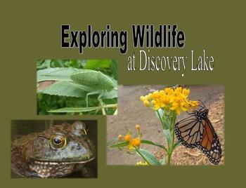 Exploring Wildlife at Discovery Lake