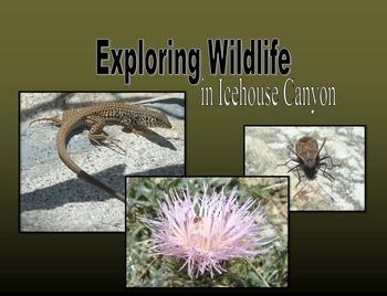 Nonfiction Book (PowerPoint): Exploring Wildlife in Icehouse Canyon - California