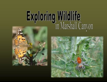 Exploring Wildlife in Marshall Canyon