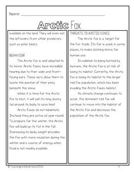 Exploring the Arctic Fox Mini-Packet