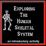 Science Anatomy - Exploring the Human Skeletal System