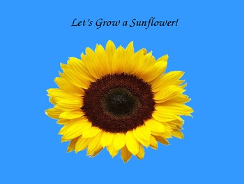 Expository Writing - How to Grow a Sunflower