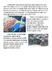 Expository Writing  - Protecting Coral Reefs