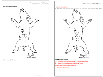External Anatomy Fetal Pig Dissection