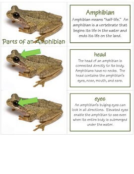 External Parts of Vertebrates & Arthropods