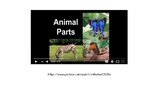 External features of animals PowerPoint