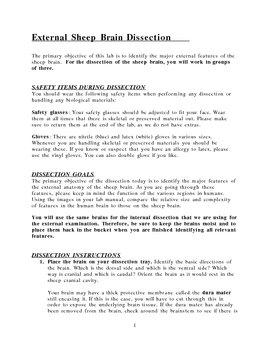 External sheep brain dissection guide