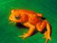 Extinct and Endangered Animals Activity