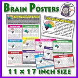 """Human Brain: Extra Large Anatomy of the Brain Posters - 11"""" x 17"""""""