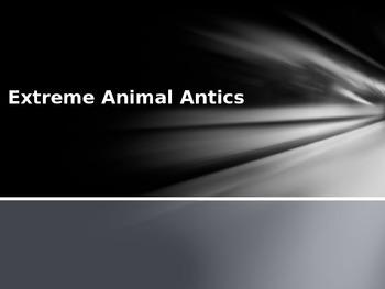 Extreme Animal Antics Gameshow