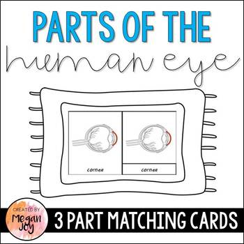Eye Anatomy 3 Part Cards