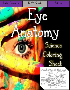 Eye Anatomy Craft